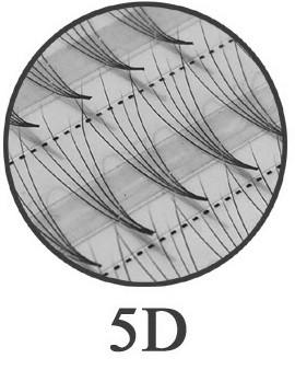 120 Flare Lashes 5D -  super ligeras - sin nudos-  0,07 mm, 0,12 mm y 0,15 mm diámetro